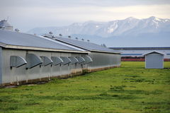 Washington Chicken Farm Lizenzfreies Stockfoto