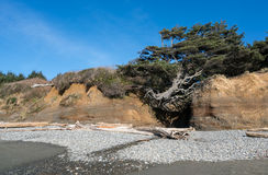 Washington Coast Afternoon Imagens de Stock