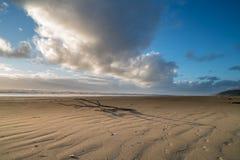 Washington Coast Beach Wilderness Stockbilder