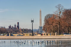 WASHINGTON, D.C. - JANUARY 09, 2014: Washington Monument with Birds in Foreground royalty free stock photo