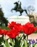 Washington, D.C. The White House spring garden tulips sculpture Royalty Free Stock Photography