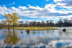Washington DC, ΗΠΑ Κήποι και λίμνη συνταγμάτων στοκ εικόνες με δικαίωμα ελεύθερης χρήσης