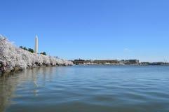 Washington DC, Κολούμπια, ΗΠΑ - 11 Απριλίου 2015: Δέντρα μνημείων και κερασιών της Ουάσιγκτον στην άνθιση Στοκ φωτογραφία με δικαίωμα ελεύθερης χρήσης