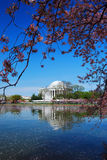 Washington DC. Jefferson national memorial with cherry blossom in Washington DC Royalty Free Stock Photos