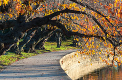 Washington DC Autumn Cherry Trees Walkway Royalty-vrije Stock Foto
