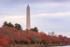Washington DC Autumn Landscape Stock Images