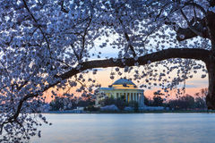 Washington DC Cherry Blossom Festival Royalty Free Stock Images