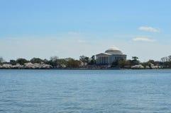 Washington DC Columbia, USA - April 11, 2015: Jefferson Memorial körsbärsröda blomningar - Washington, DC Royaltyfri Fotografi