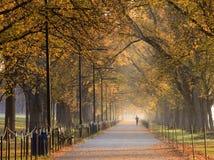 Washington DC della camminata dell'albero di olmo Fotografie Stock Libere da Diritti