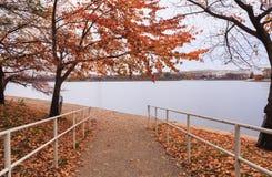 Washington DC-Gehweg zum Gezeiten- Becken Stockbild