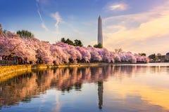 Washington DC im Frühjahr lizenzfreies stockfoto