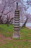 Washington DC Japanese Pagoda statue cherry blossoms Royalty Free Stock Image