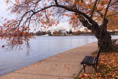 Washington DC Jefferson Memorial in Autumn. Autumn landscape of Washington, DC's famous cherry trees in fall orange color along the Tidal Basin where nature Stock Image