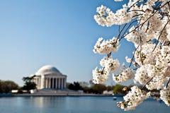 Washington DC Jefferson Memorial Blossoms Stock Photo
