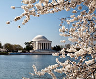 Washington DC Jefferson Memorial Blossoms Royalty Free Stock Photos