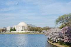 Washington DC - Jefferson Memorial in spring royalty free stock images