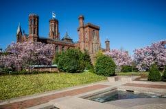 Washington DC - Kwitnący magnoliowych okwitnięć drzewa obramia Smithsonian kasztel na national mall w washington dc zdjęcia royalty free