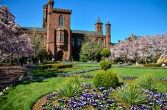 Washington DC - Kwitnący magnoliowych okwitnięć drzewa, ogródy i obramia Smithsonian kasztel na national mall wewnątrz fotografia royalty free