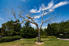 WASHINGTON, DC - Metal tree in the National Gallery of Art Sculpture Garden Stock Images