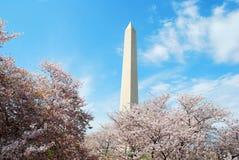 Washington DC Monument. And Cherry Blossom Stock Photos