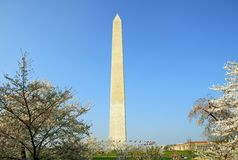Washington DC Monument Cherry Blossom Royalty Free Stock Image