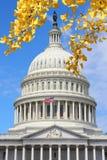 Washington DC. National Capitol building with US flag. Autumn leaves stock photo
