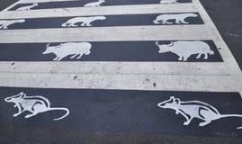 Washington DC, o 5 de agosto: Passthrough da rua do zodíaco de Washington District de Colômbia Imagens de Stock Royalty Free