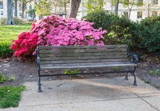 Washington DC Park Bench Azaleas Royalty Free Stock Image