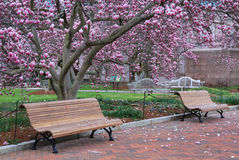 Washington DC Park Benches Magnolia Trees Royalty Free Stock Photo