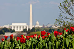 Washington DC Skyline with Tulips Stock Photos