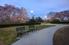 Washington DC Spring Park Magnolias Stock Photography
