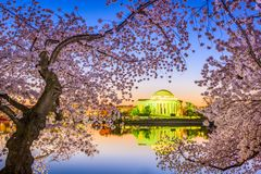 Washington DC in Spring Royalty Free Stock Photography