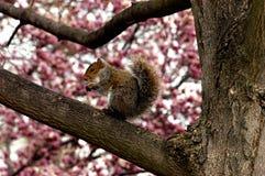 Washington DC Squirl Stockbild