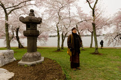 Washington DC - Tibetan Monk with Cherry Blossoms. Washington, DC: Tibetan monk posing with Japanese Lantern in a grove of cherry trees at peak Spring bloom next Stock Photography