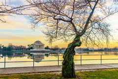 Washington, DC at the Tidal Basin and Jefferson Memorial Stock Photos