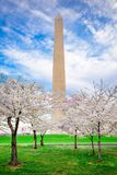 Washington DC in Spring Stock Image