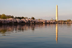 Washington DC Washington Monument Royalty Free Stock Images