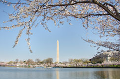 Washington DC, Washington Monument in spring Stock Photography