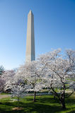 Washington DC, Washington Monument in spring royalty free stock photography