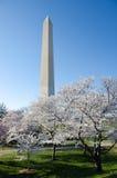 Washington DC, Washington Monument in spring Royalty Free Stock Photography