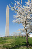 Washington DC, Washington Monument in spring royalty free stock photo