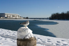 Washington DC winter Stock Images