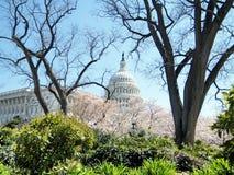 Washington de kers lossoms dichtbij Capitool die April 2010 bouwen Royalty-vrije Stock Afbeelding