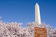 Washington in de Lente Stock Afbeeldingen