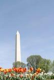 Washington-Denkmal, Gleichstrom Stockbilder
