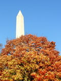 Washington-Denkmal und Baum Stockfotografie
