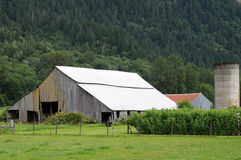 Washington farm. Gray barn with silo and shed against forest stock photo