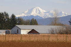 Washington Farm Buildings Stockbild