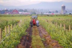 Washington Farm Labour Royalty-vrije Stock Foto's