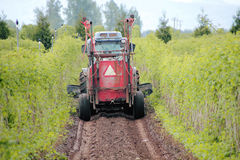 Washington Farmer Grooming ses cultures Photographie stock